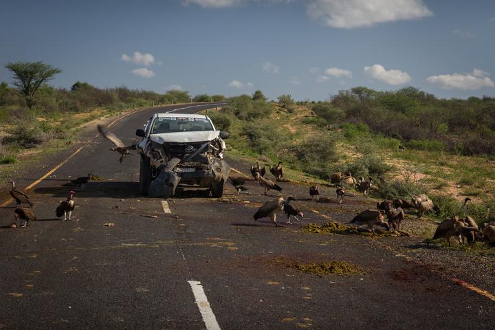 pickup vultures 720x480