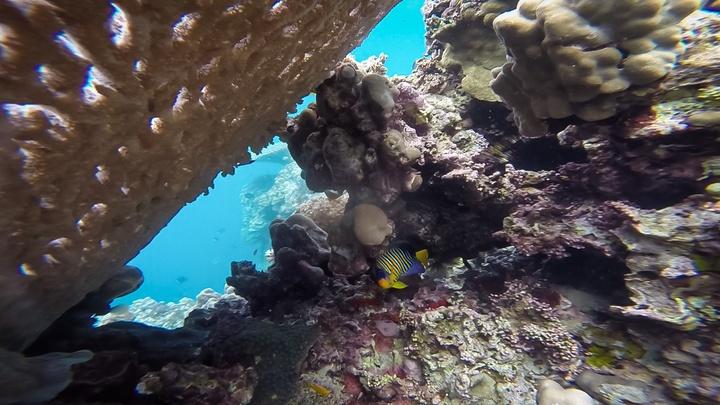 djibouti reef 2 720x405