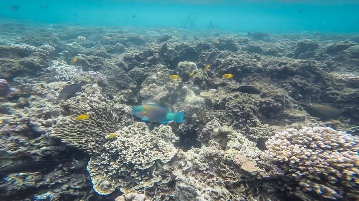djibouti reef 720x404
