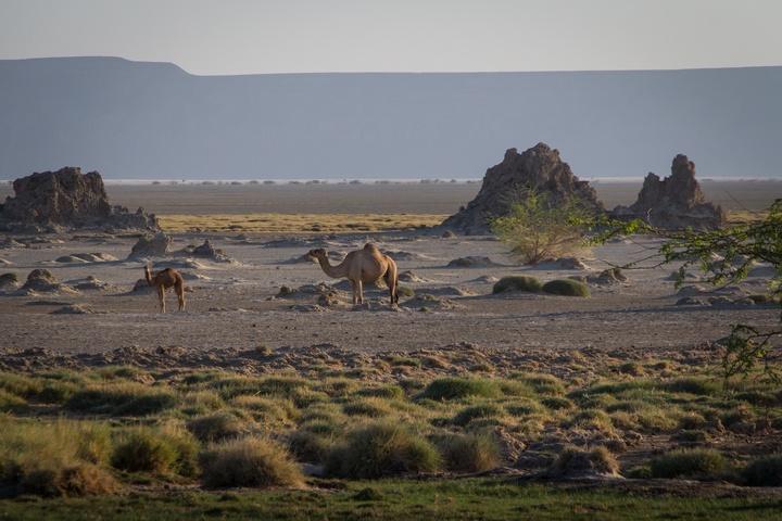 lake abbe camels 720x480