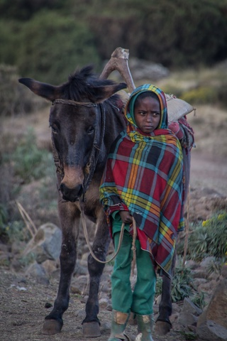 simien kid and donkey 320x480