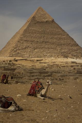 giza pyramids camel 320x480