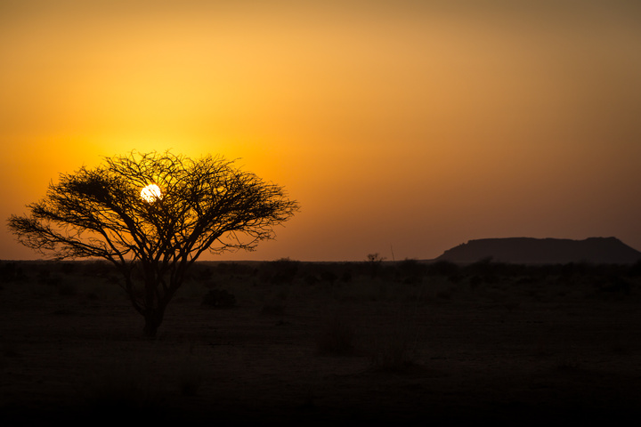 sudan sunset tree 720x480