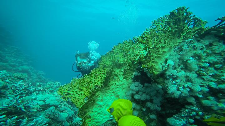 marsa alam dan fish 720x405