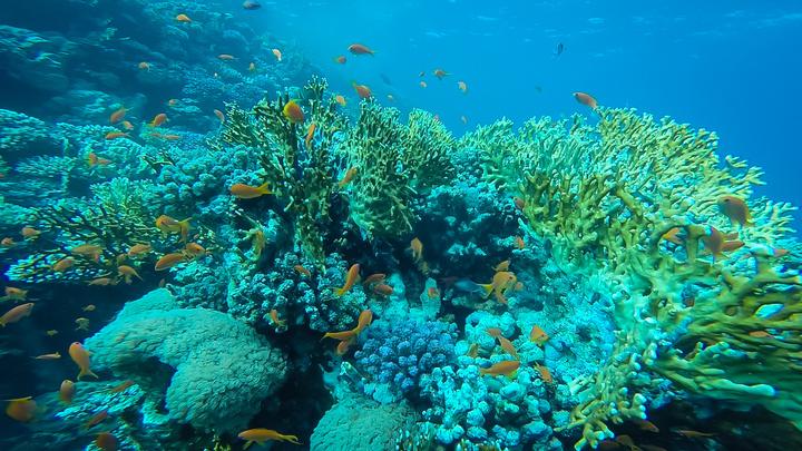 marsa alam fish 720x405