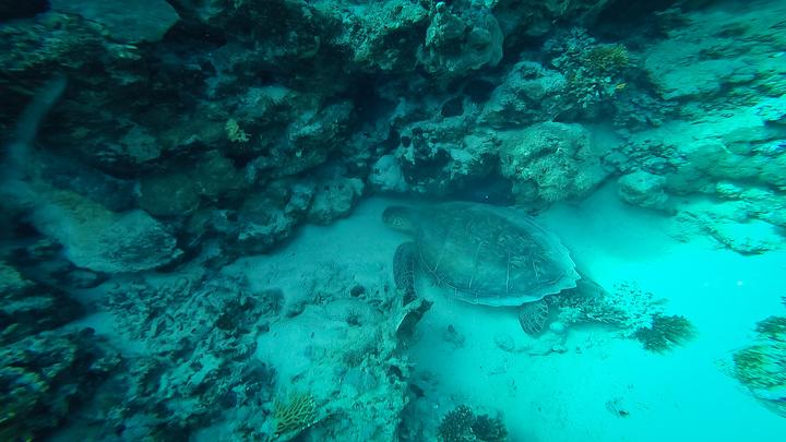 marsa alam turtle 720x405